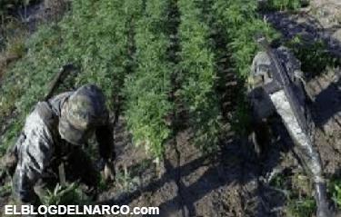 Así vivía El Chapo Guzmán en las montañas de Sinaloa