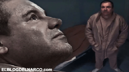 Delataron al Chapo y redujeron sus sentencias, quiénes fueron los soplones alrededor del narco