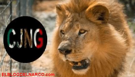 Narcos alimentaban leones con cuerpos de sicarios rivales