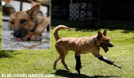 Así es el perro que sobrevivió a las torturas a los sicarios del cártel de Los Zetas