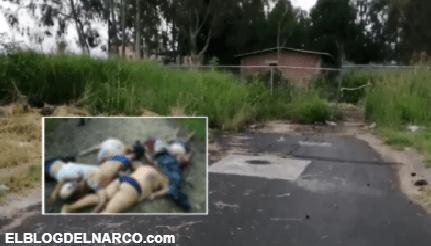 FOTOS Así dejaron a 4 hombres y dos mujeres, estaban torturados en territorio del Mencho