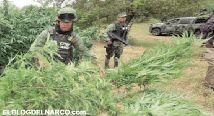"""Con """"El Padrino"""" Cienfuegos al frente de la Sedena, incautación de droga disminuyó hasta en un 70%"""