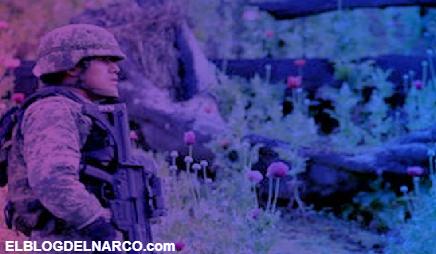 Impera la narco-violencia en sierra de Guerrero aun sin amapola