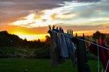 la roba mirant la posta de sol