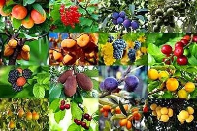 tipos-de-arboles-frutales-tipos