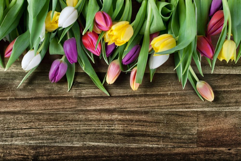 tulips and pallet