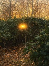 Picture of the sunset through brambles