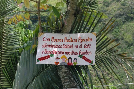 """With good agricultural practices we will have quality in our coffee and our family's well-being"""