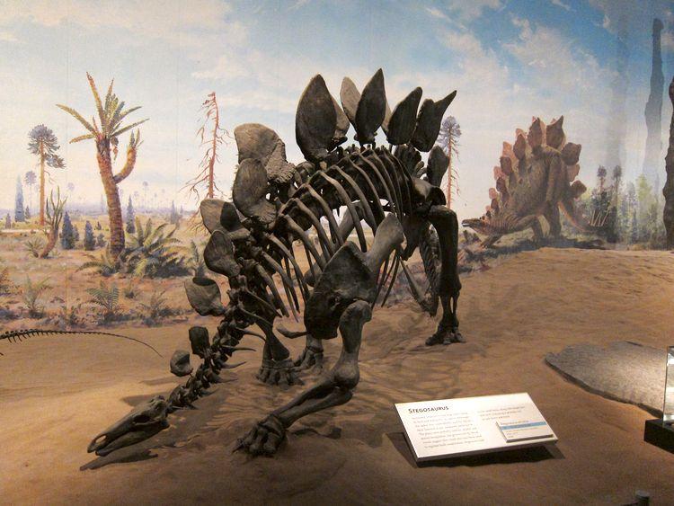 canada-02-drumheller-dinosaur-provincial-park-13