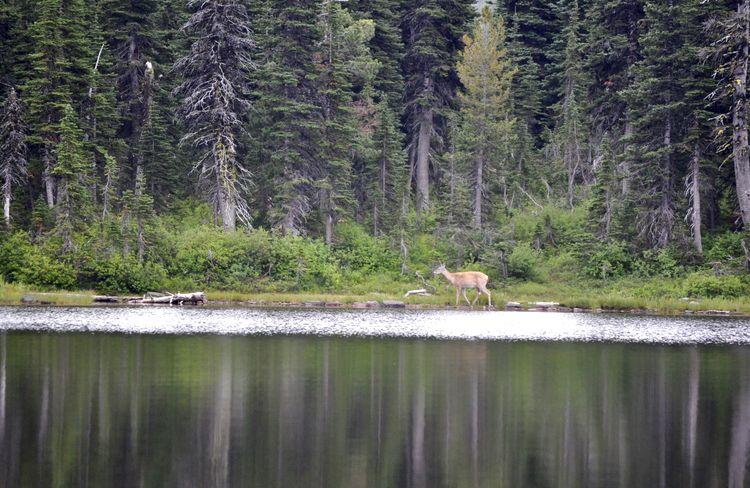 canada-16-waterton-lakes-27