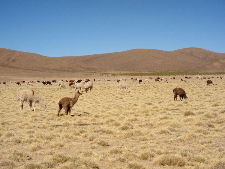 bolivia-itinerario-20-dias-30