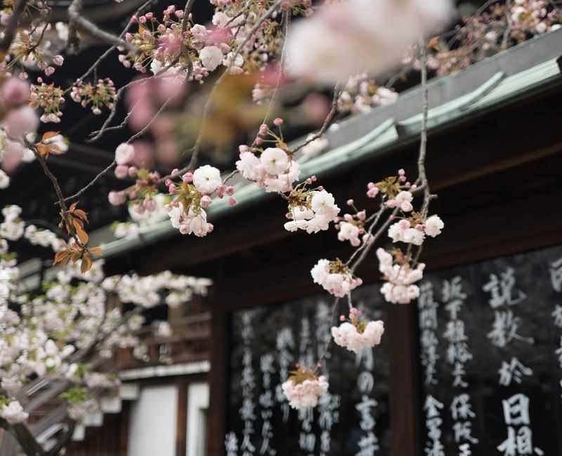 La primavera en la medicina tradicional china