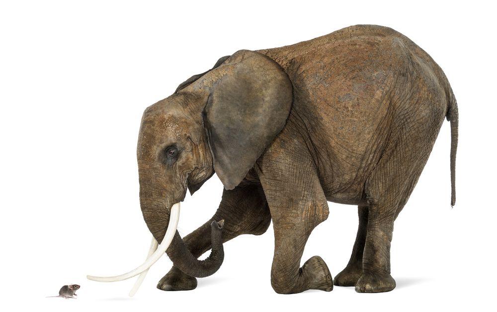 raton-elefante
