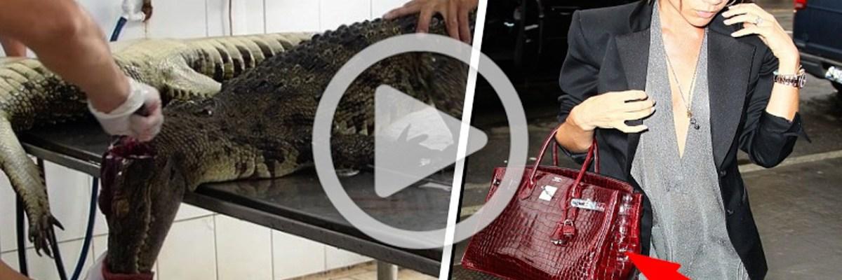 61e7c002e Impactante video expone el horrible origen de algunos bolsos y zapatos de  lujo