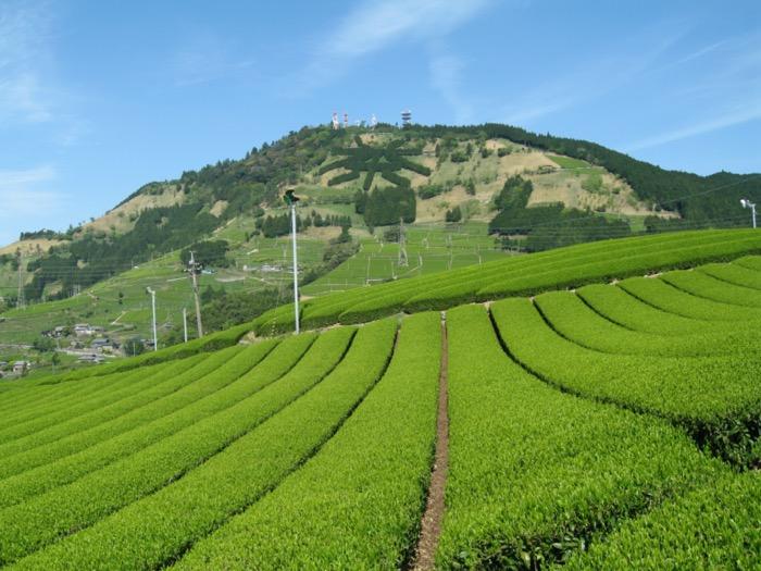Fukamushi chá no Japão