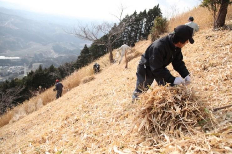 cultivo tradicional do Fukamushi cha