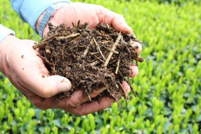 compost de Chagusaba