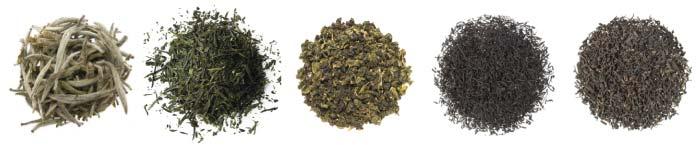 tipos de té - camellia sinensis