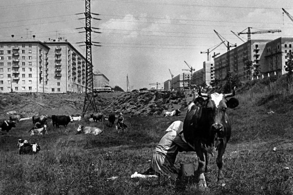 Cheriómushki, 1954.