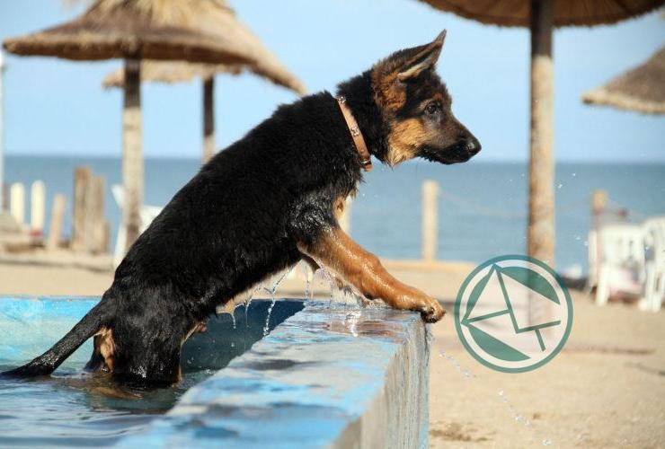 Mar del Plata cuenta con playa exclusiva para mascotas07