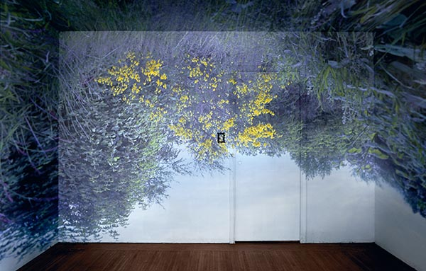 Wildflowers in a room