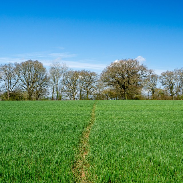A hiking trail that simply consists of a one foots' width line of trodden grass across a field