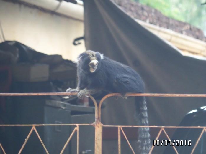 we saw a monkey