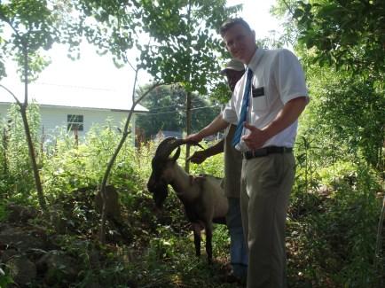 Friendly pet goat