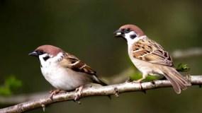 Poder ver aves desde la ventana, en el jardín o en el vecindario tiene una relación directa con el bienestar mental, dice el estudio.