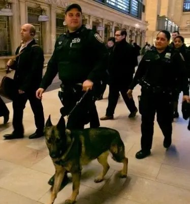Habrá patrulla canina  en NY.