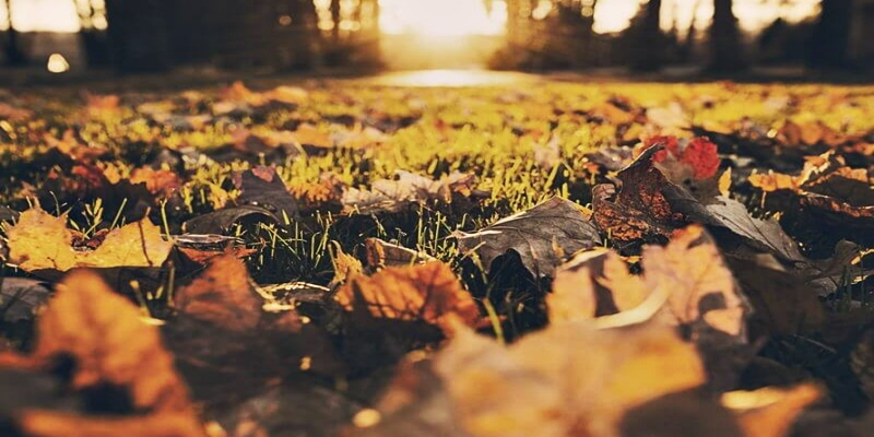 forest-meadow-leaves-autumn-large-800x533