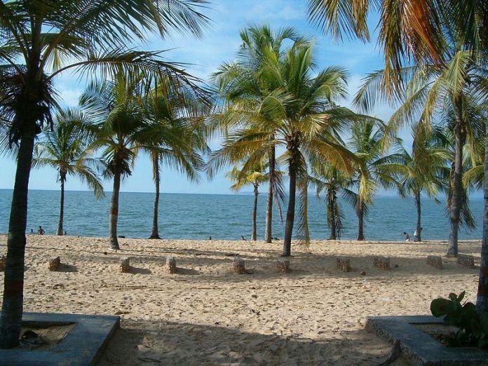 Palmeras en la playa San Luis