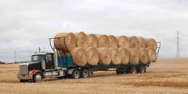 The FMCSA Formally Issues Waiver To Delay ELD Compliance For Ag, Livestock Haulers