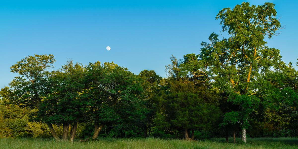 Moonrise At Home - Moon - Photo