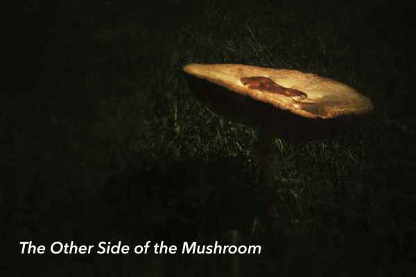 There are always two sides to a mushroom...