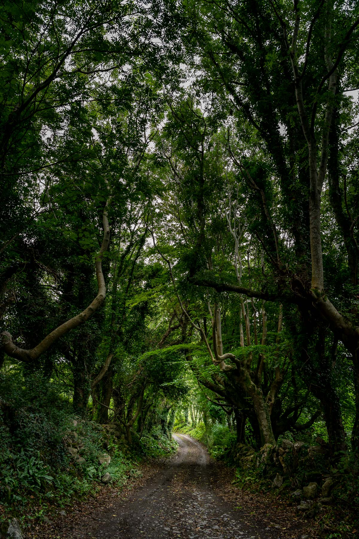 A Road Through the Trees