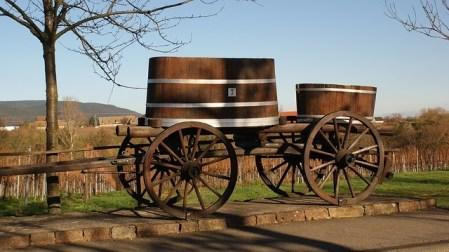 Chaque saison le paysage viticole se renouvelle.