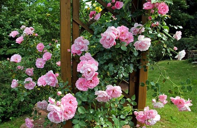 différents types de roses