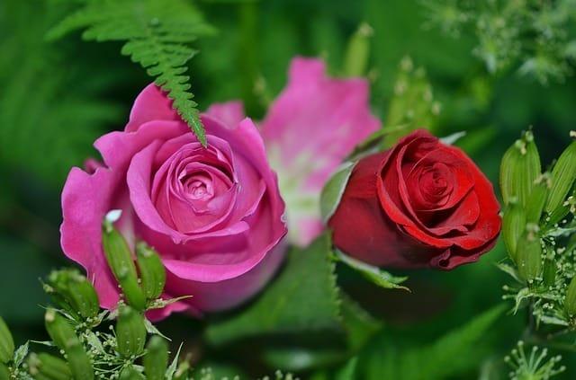 Pourquoi les Roses Fanent Rapidement ? (et 5 astuces pour les rendre plus belles)