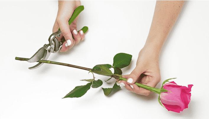 Conseils pour l'entretien des fleurs