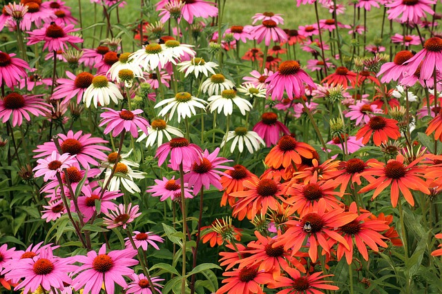 plantes amies des roses