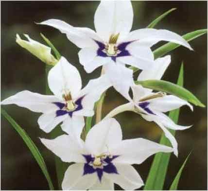 300 nom de fleur
