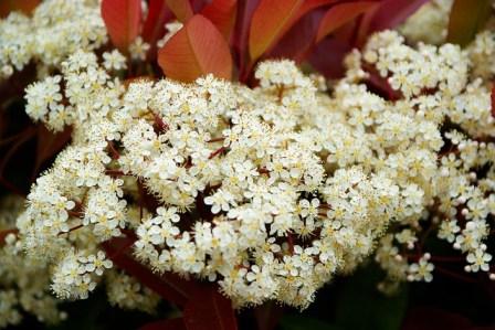 300 noms de fleur