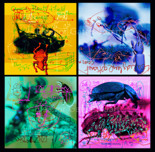 Artwork: Bug Images x 4 by Eleanor Gates-Stuart