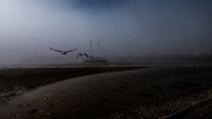 Fog and Flight