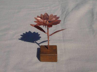 helianthus copper flower
