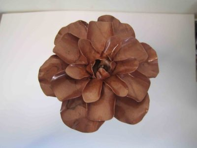 Camellia copper flower from above