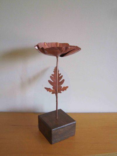 poppy copper flower