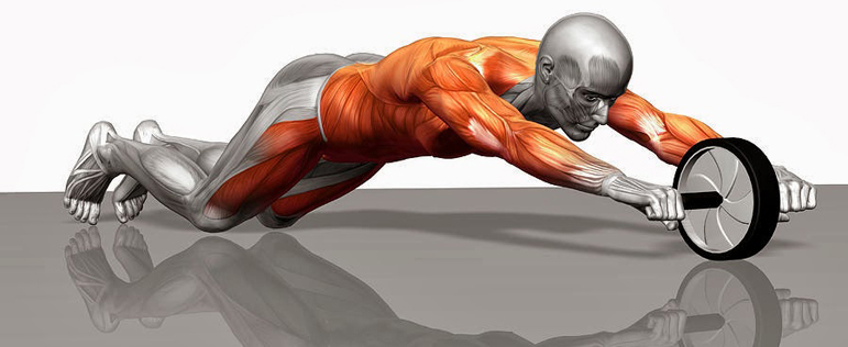 Abs-Roller-Musculos1