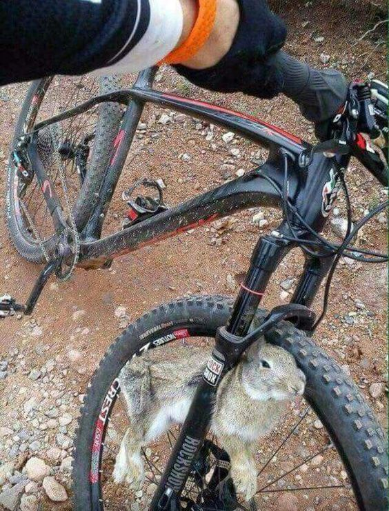 столкновение кролика и велосипедиста